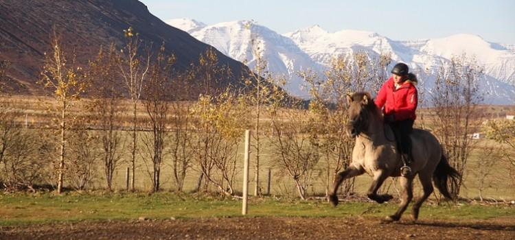Våra hästar: Strengur frá Hléskógum