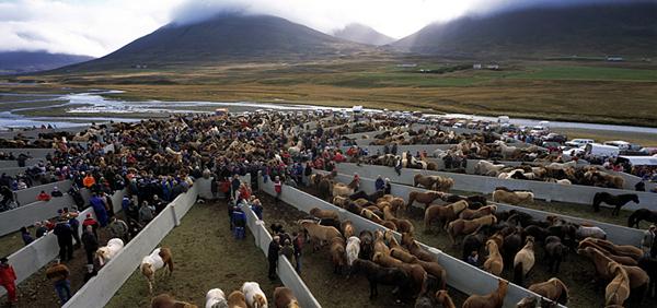 Hästinsamling i hästarnas vagga