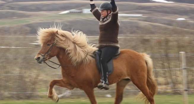 6 hästar på export till Sverige
