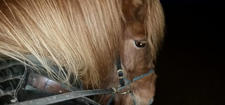Träning av hästar hela dagen lång