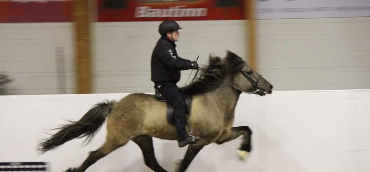 O boy, vilken hästhelg!