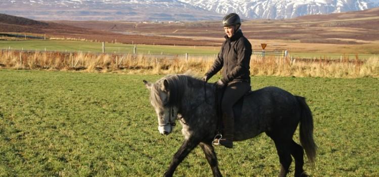 Hästjobb på Island 2018