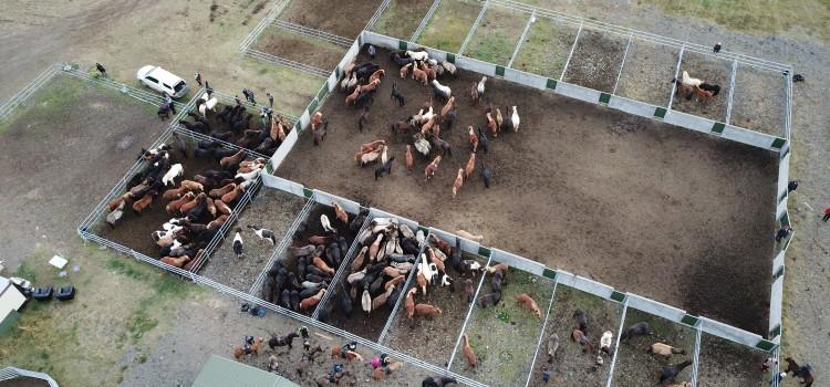 Himmelska bilder från hästavskiljningen