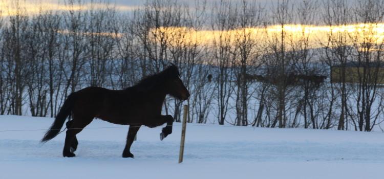 Vinter & vinterträning